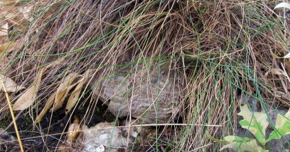 Gniazdo os na Łabajowej zostało zlikwidowane